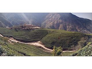 Full extended view of Everest Tea Garden