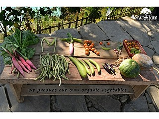 Our Organic Vegetable