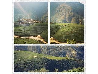 Quick Preview: Everest Tea Garden