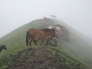15. Horses over the hill: only means of transport for the people living in the hills