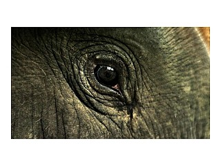 Closer look of Elephant