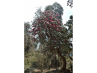 Day 2 | During the spring the surrounding hill will be red Rhododendron flowers