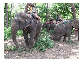 Elephant ready for Jungle Safari