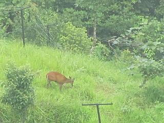Found a deer , lucky us