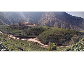 Full extended view of Everest Tea Garden