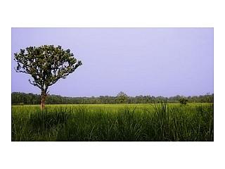 Green Forest at Sauraha