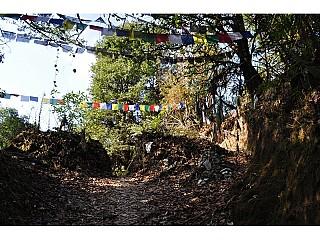 Prayers flag around trees