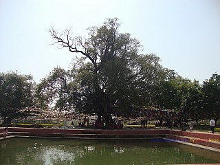 Puskarini with the Bodhi Brikshya: Puskarini is the Holy Pond where Buddha's mother took the ritual dip prior to his birth