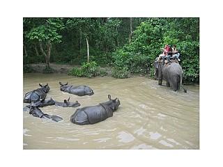 Rhinos Bath