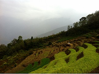 Terraced Agricultural Field