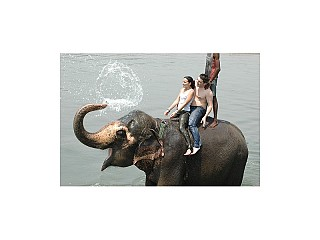 Tourists and Elephant Bath