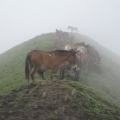 Horses over the hill: only means of transport for the people living in the hills