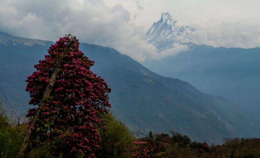 Shot from Tadapani Nepal